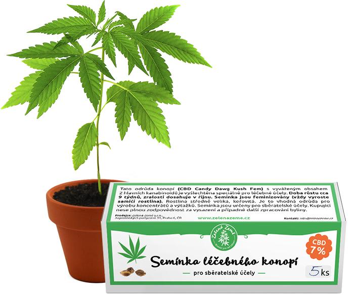 Zelená Země  Semínka léčebného konopí 5ks