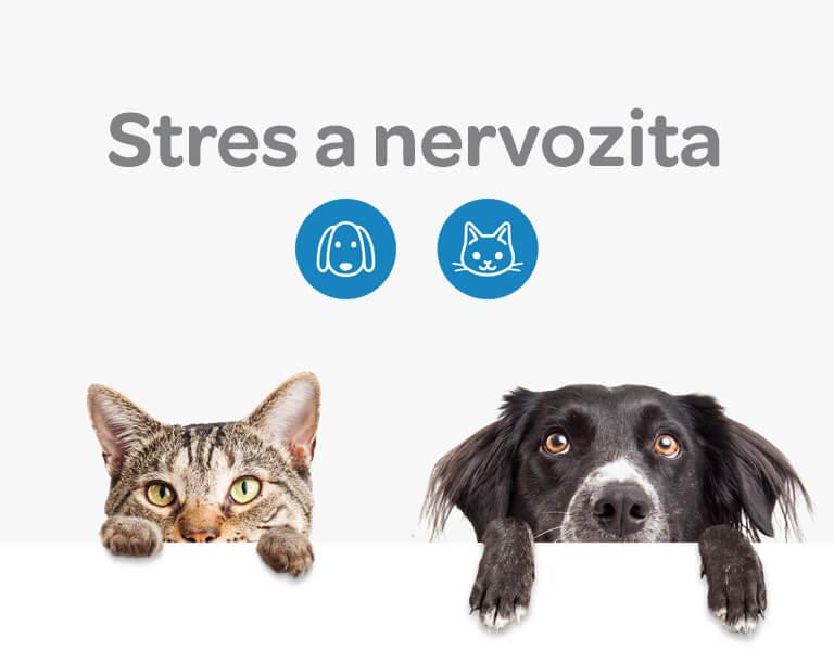 Alavis, stres, nervozita, psi, kočky
